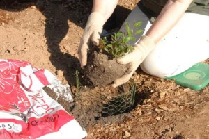 Planting & Watering Guide for California NativePlants