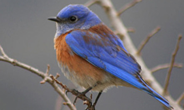 All About Ojai: Winter Migration Bird Walk
