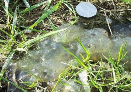 meleca encontrada após explosão de meteoro