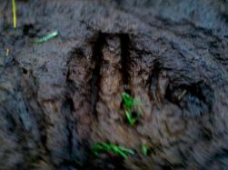 pegadas na lama
