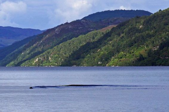 Castor, lontra, ou a legendária criatura do Lago Ness?