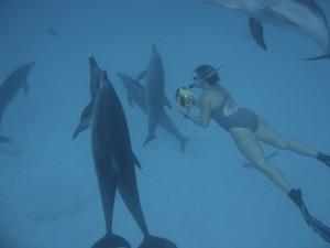 golfinhos-e-denise