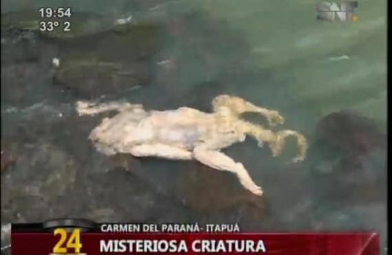 misteriosa critaura no Paraguai 2