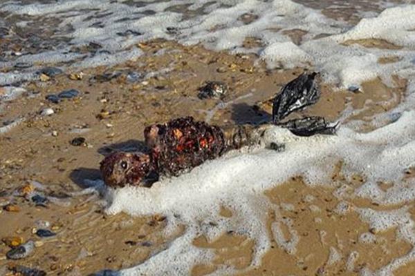 Suposto cadáver de sereia é encontrado em praia da Inglaterra 2