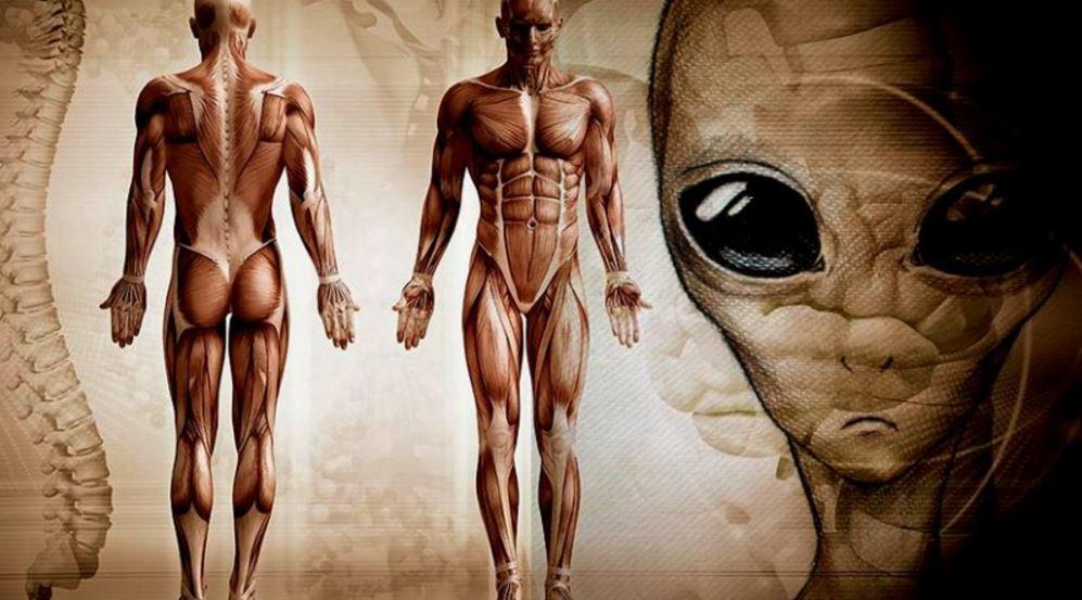 Humanos não evoluíram na Terra, conclui cientista