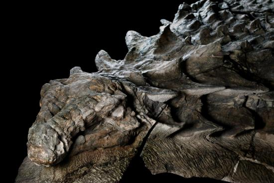 dinossauro mumificado