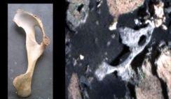 ossos em Marte