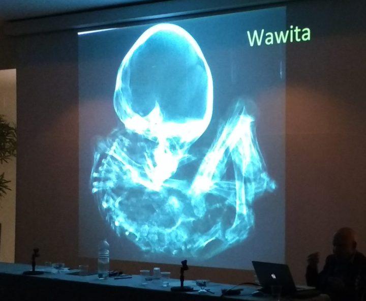 Congresso Mundial sobre as Múmias de Nazca, aberto ao público, ocorre em Roma 3