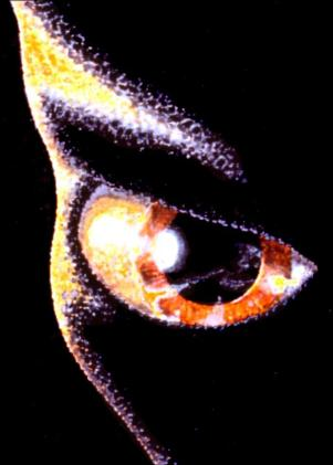 A história de contato alienígena que desbancou 16 testes de detectores de mentira 1