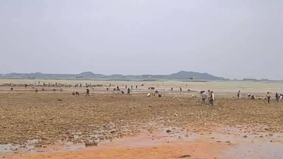 Tailândia: Mar recua por mais de 2 km