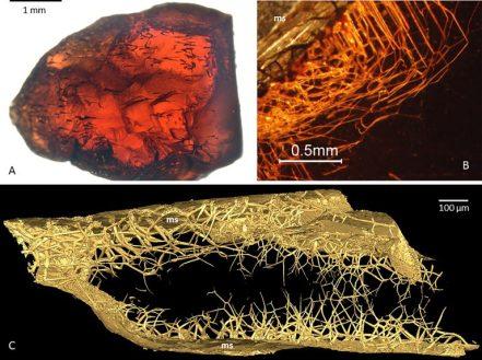 Os misteriosos organismos vivendo dentro de gemas preciosas e a procura por vida alienígena 2