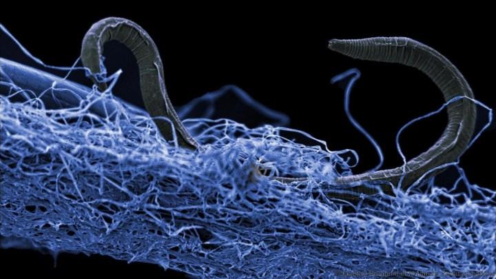 Um gigantesco ecossistema repleto de vida vive a quilômetros abaixo de nosso pés, descobriram cientistas 1