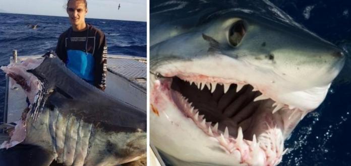 O que teria consumido o corpo deste enorme tubarão deixando só a cabeça