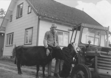Helge Hageland har godt lag med dyr, og traktoren har gjort sitt inntog på gården: Massey Ferguson.