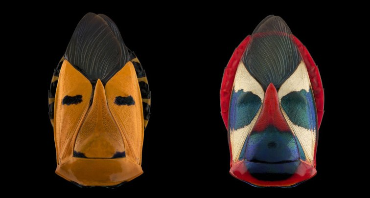 pascal-goet-insect-mask