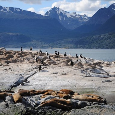 spy-on-some-of-chiles-most-remote-wildlife-along-the-terra-do-fogo-archipelago