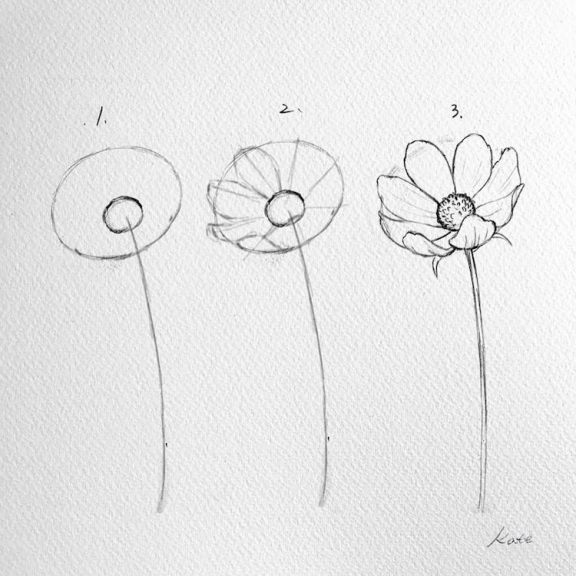 how-to-draw-a-flower-kate-kyehyun-park-12 (1)