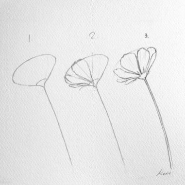 how-to-draw-a-flower-kate-kyehyun-park-3 (1)