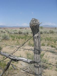 Near the intersection of Highway 395 and Highway 6 in the Owens Valley. Fences like these are commonplace reminders of a rural past and present.