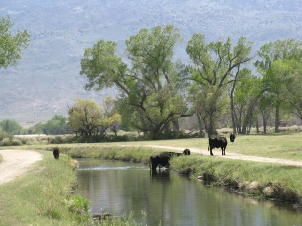 """A canal of the Owens River east of Bishop, California. So peaceful in this photo, but the source of much conflict, beautifully summarized in Kim Stringfellow's """"There It Is, Take It!"""" work of audio art."""