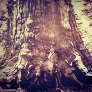 Galen Clark claimed Yosemite had cured him. Thanks to Clark, Yosemite is protected for all time.