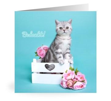 Owiwi kitten bedanktkaart
