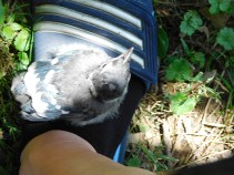 A Blue Jay on my foot? It's real and incredible!
