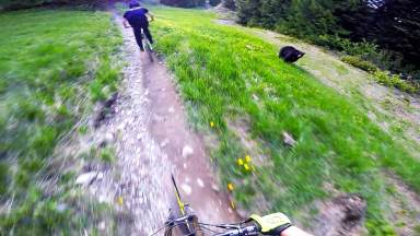 dwayne johnson trail with bear at whistler bike park canada