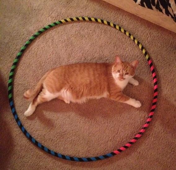 cat_circle (11)
