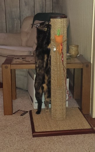 Hazel stretching herself out to scratch the top of her scratching post!