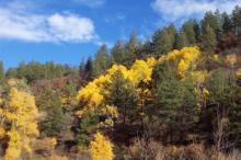Autumn Color Change