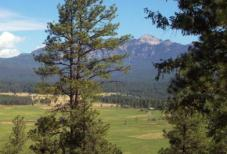 North Pagosa Springs Landscape