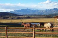Continental Estates ranch horses