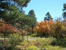 Colors of Pagosa