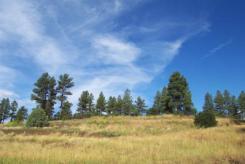 Echo lake estates land