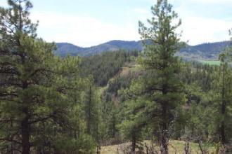 Elk Park Landscape