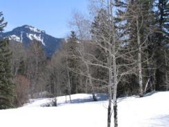 rito blanco snow forest