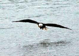 6-Eagle