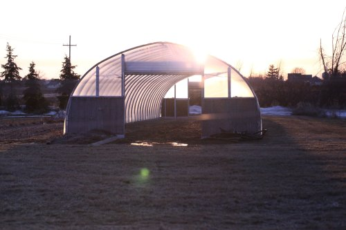 greenhouse #5 w: flare