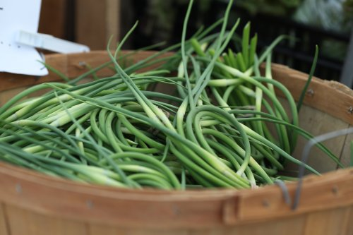 basket of garlic scapes