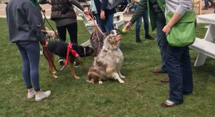 Pet Pals embarks on inaugural dog festival