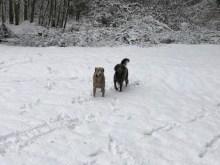 Byram's Bella and Daisy_0828