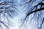 Leafless-Trees-Leiden-2760