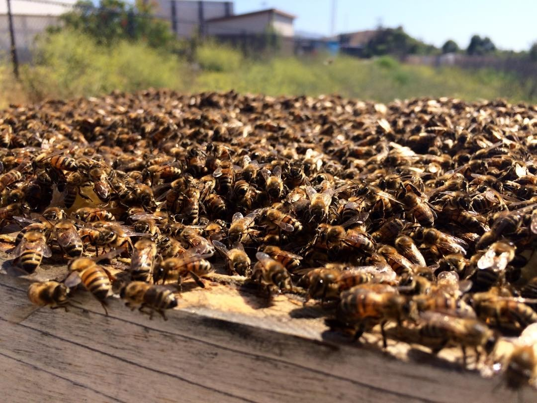 Sea of #bees
