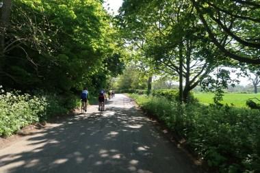 Early summer greenery