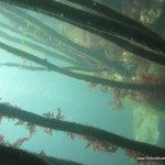 kelp_forest_in_the_spring.jpg