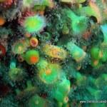 penvin_green_jewels.jpg