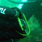 pipe_fish.jpg