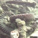 red-sea-diving_010212_0232.jpg