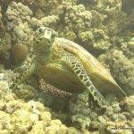 red-sea-diving_020212_0382.jpg